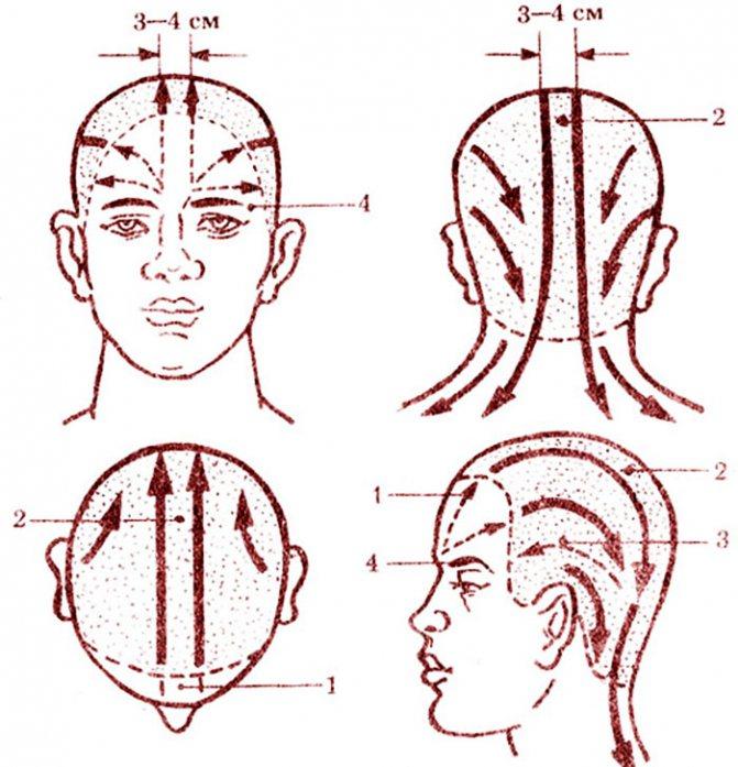 Массажные линии волосяной части головы