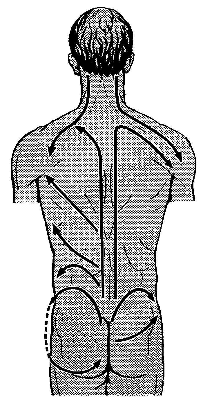 Направление основных массажных движений при массаже спины